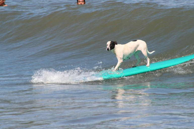Surf lessons for dogs